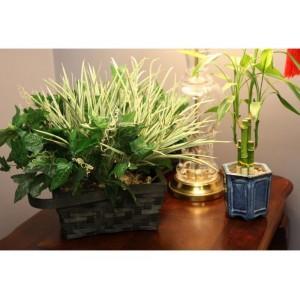 Plant WiFi Hidden Camera